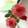 春のガーデニング、我が家の花壇