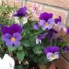 3月鉢植えGarden